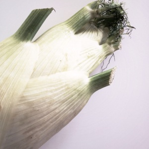Post 57 Fennel